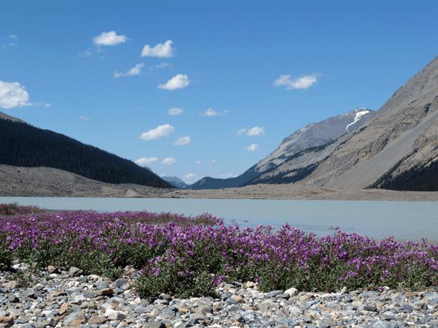 Icefield-Parkways