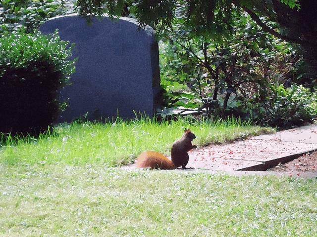 ohfamoos_Trauer_Friedhof_small