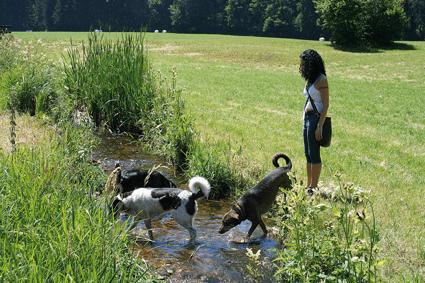 ohfamoos_Hundefuehrer_Mit-Hund-Wandern2_small
