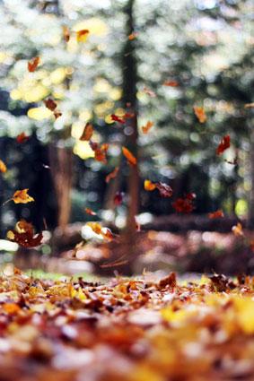 Herbststimmung_Laub_Cornelia-Luetge