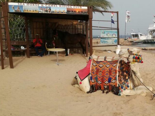 Urlaub, Rotes Meer, Ägypten, Hurghada,