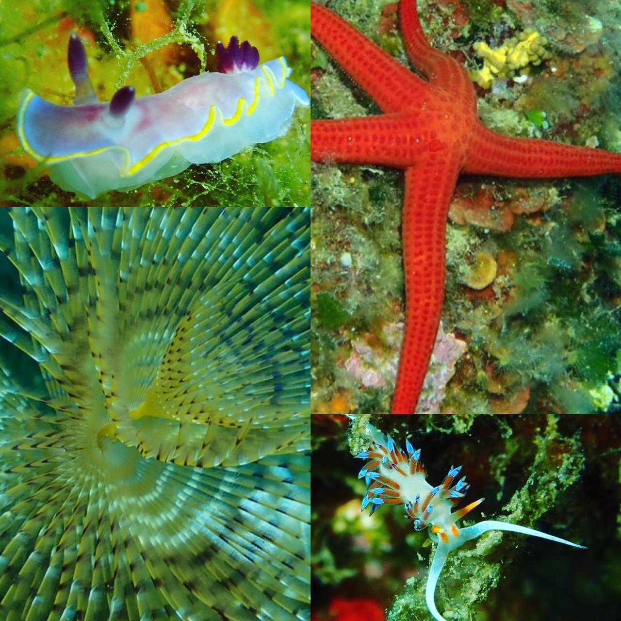 Elba Unterwasser Nacktschnecken, Seestern,