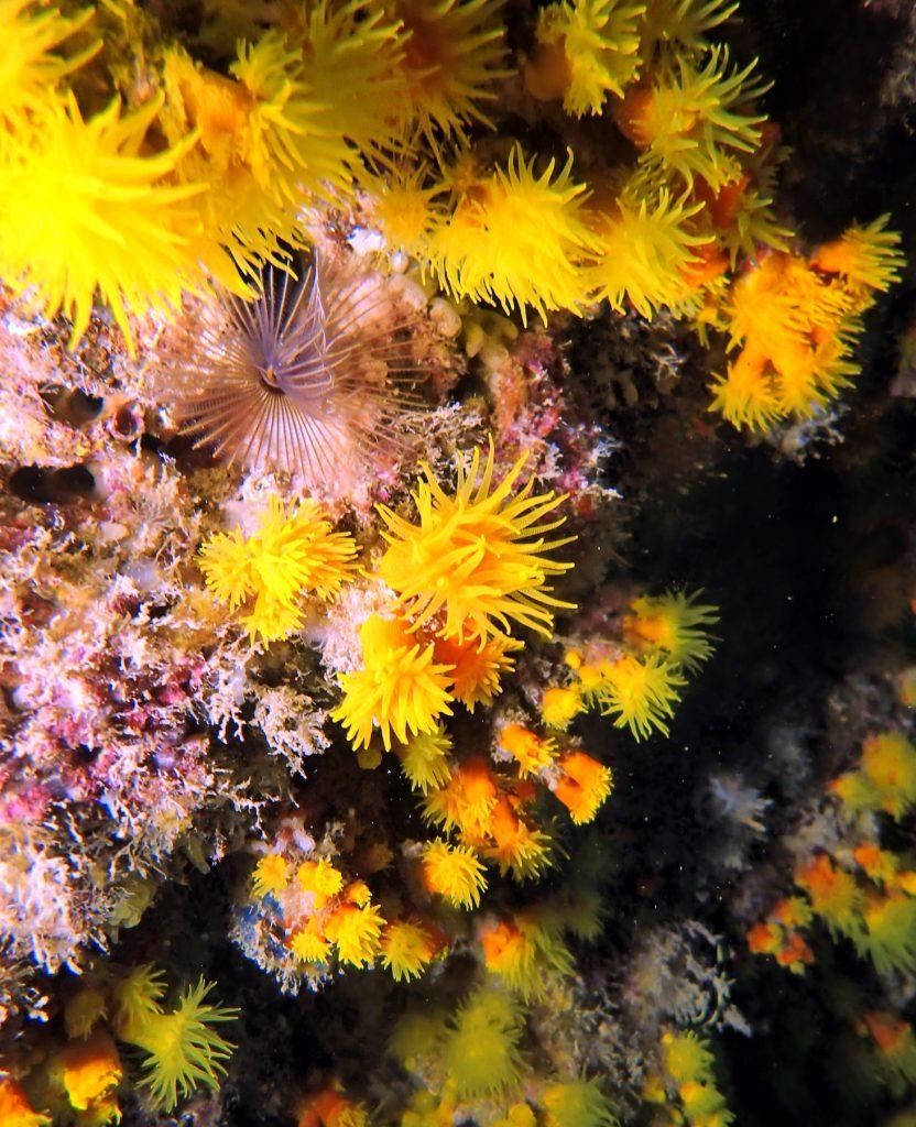 Fotografieren unter Wasser