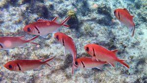 Unterwasser in Kapverden