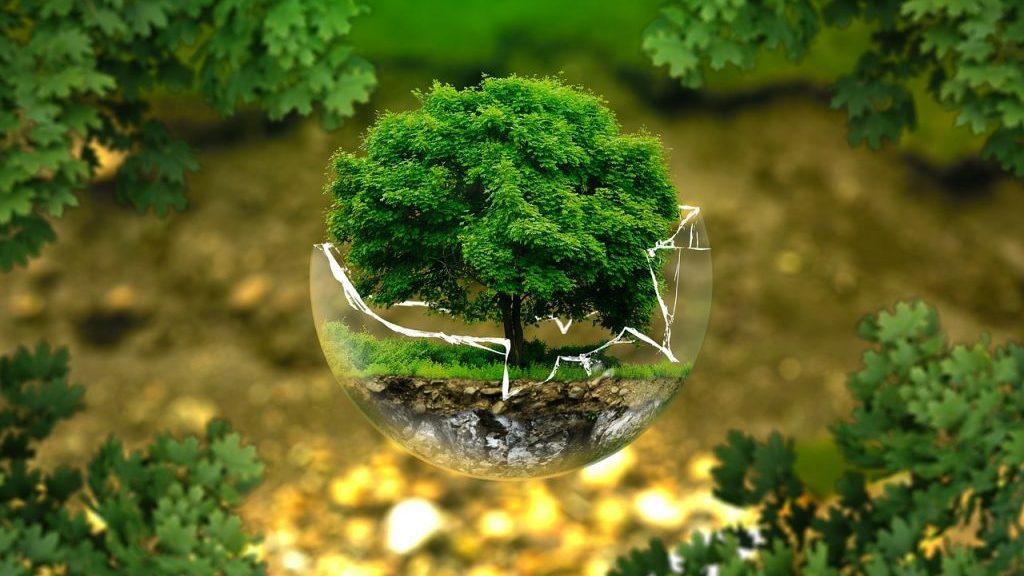 Mit Ecosia Bäume pflanzen
