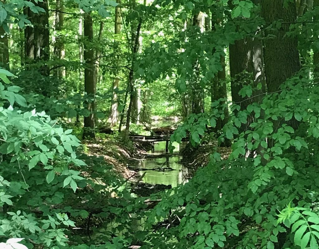 Bach im Wald