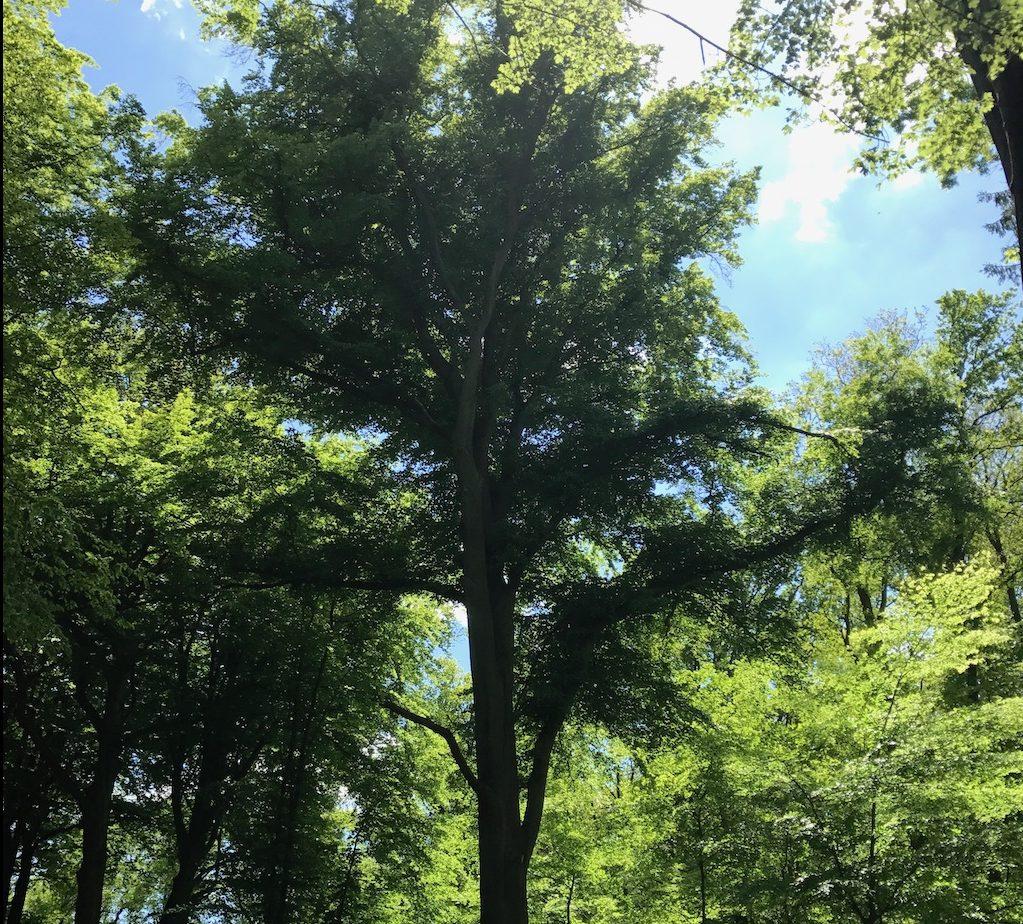 Wälder müssen geschützt werden