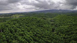 Aufforstung in Costa Rica
