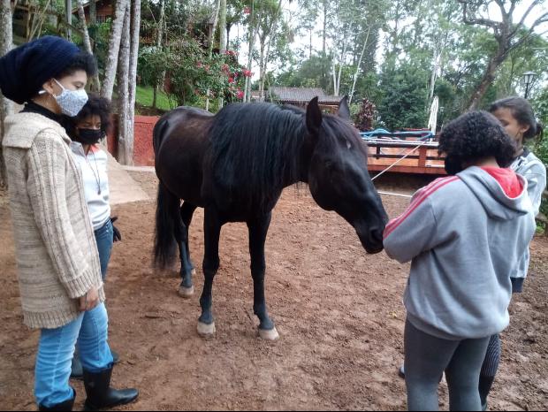 Bonnie das Pferd - ein Therapie Tier